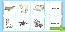 Arctic Animals and their Young Word Matching Cards