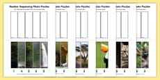 Rainforest-Themed Number Sequencing Photo Puzzles