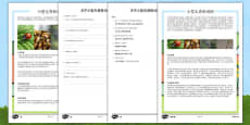 Minibeasts Differentiated Reading Comprehension Activity Mandarin Chinese