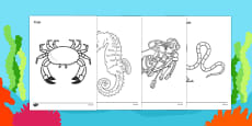 Under the Sea Colouring Sheets
