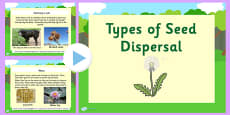 Types of Seed Dispersal PowerPoint