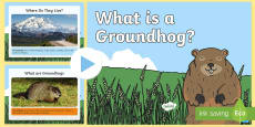 Groundhog Day: What Is a Groundhog Information PowerPoint