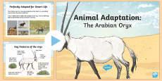 The Arabian Oryx Adaptation PowerPoint
