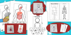 Humans Interactive Visual Aids Resource Pack