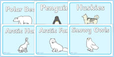 Polar Animals Group Signs