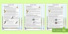 KS2 Garden Birds Differentiated Reading Comprehension Activity