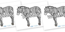 Days of the Week on Zebras