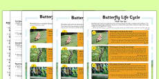 Butterfly Life Cycle Differentiated Reading Comprehension Activity Arabic Translation