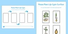 Potato Life Cycle Activity Sheet