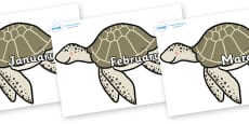 Months of the Year on Turtles