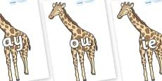 Phase 5 Phonemes on Giraffe