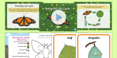 Life Cycle of a Butterfly Resource Pack