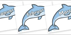Months of the Year on Dolphins
