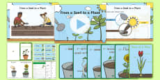 Life Cycles of Plants Early Childhood Resource Pack