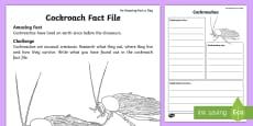 Cockroach  Fact File