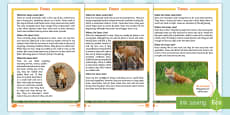 KS1 Foxes Differentiated Fact File