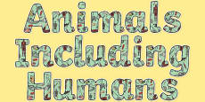Animals Including Humans Display Lettering