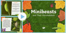 Minibeasts and their Microhabitats PowerPoint