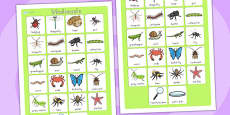 Australia - Minibeasts Vocabulary Poster Mat