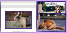 French Pets Display Photos