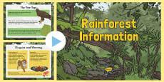 Rainforest Information PowerPoint
