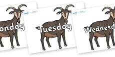 Days of the Week on Big Billy Goats