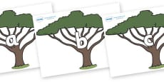 Phase 2 Phonemes on Acacia Trees