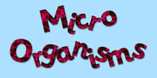 'Microorganisms' Display Lettering