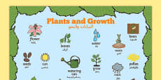 Plants and Growth Topic Word Mat Arabic Translation