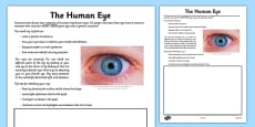 Human Eye Drawing Activity Sheet