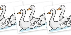 Tricky Words on Swans