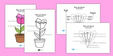 Parts of a Plant and Flower Labelling Activity Sheet Polish Translation