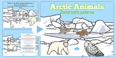Winter Arctic Animals Habitat PowerPoint Polish Translation
