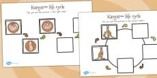 Australia - Kangaroo Life Cycle Activity Sheets