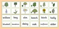 Nature Tree Matching Cards