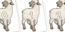 Numbers 0-31 on Lamb