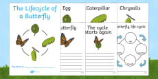Butterfly Life Cycle Workbook (Minibeasts)