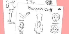 My Body Dictionary Colouring Sheet Cymraeg