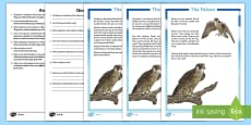 Falcon Differentiated Reading Comprehension Activity