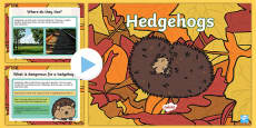 Hedgehogs PowerPoint