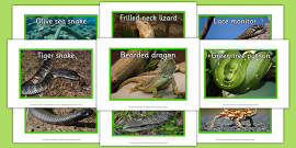 Australian Reptiles Display Photos