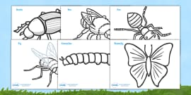 Minibeasts Colouring Sheets (Detailed Version)