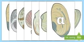 A-Z Alphabet on Sea Shells