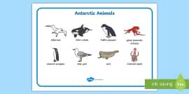 Antarctic Scene Word Mat