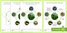 Flowering Plant Life Cycle