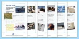 Polar Animals Factfile Sheets