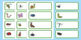 Editable Drawer - Peg - Name Labels (Minibeasts)