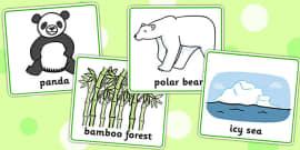 Matching Cards Bears and Habitats