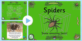 Spiders Facts PowerPoint (Minibeasts)