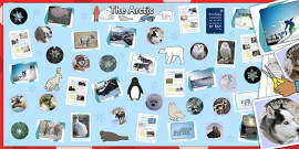 Ready Made Arctic Display Pack